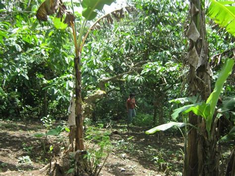 fruit bearing trees identification clean title farm lot for sale at tagaytay with fruit