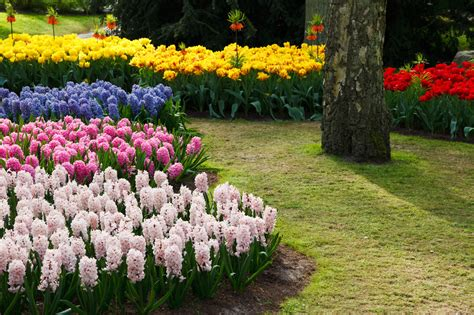 flower bed decoration 18 flower bed ideas and designs with pictures decorationy