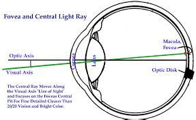 does eye color affect peripheral vision neurophysiology why does a light object appear lighter
