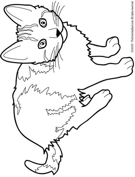free printable coloring page of a cat cat color pages printable cat free printable coloring