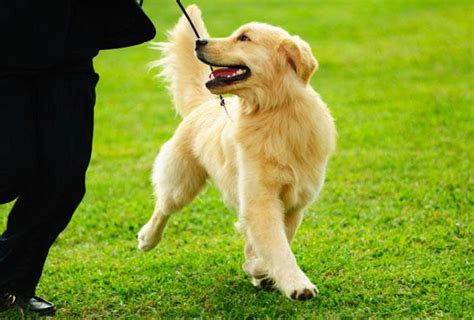 free puppy classes free tips puplife supplies