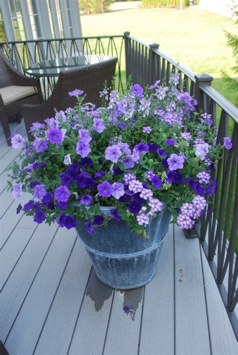 17 best ideas about petunias on pinterest insect repellent plants companion planting and