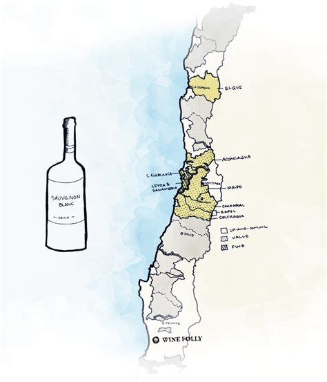the best sauvignon blanc the best wines to try from chile wine folly