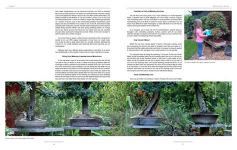 bonsai foundations books bonsai book bonsai basics the foundations of bonsai