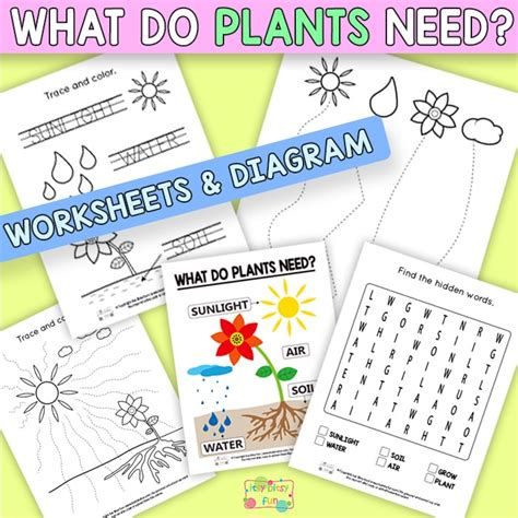 what do plants need to grow worksheet what do plants need to grow worksheets itsy bitsy