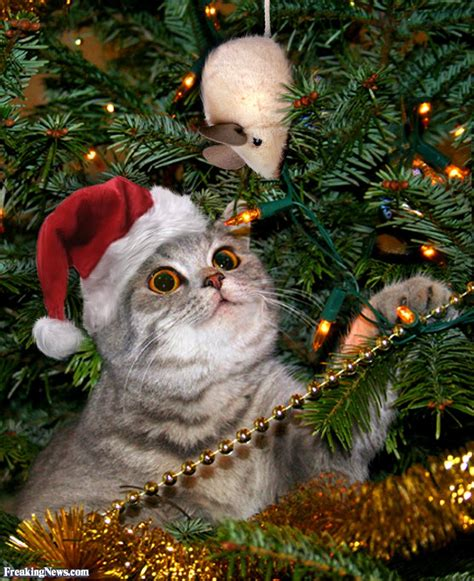 repel cat christmas tree cat after a mouse in the tree pictures freaking news