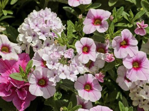 Garten Blumen by Gartenblumen Garten