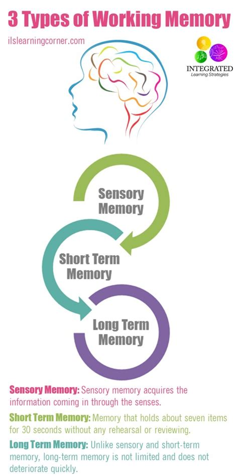 Moment Memory Brain types of memory working memory to your child s