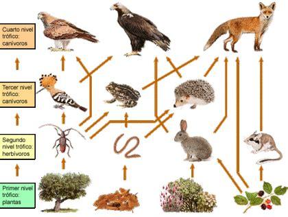 cadenas redes y piramides troficas wikipedia pir 225 mides ecol 243 gicas redes y cadenas tr 243 ficas biolog 237 a