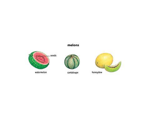 plant 1 noun definition pictures pronunciation and seed 1 noun definition pictures pronunciation and