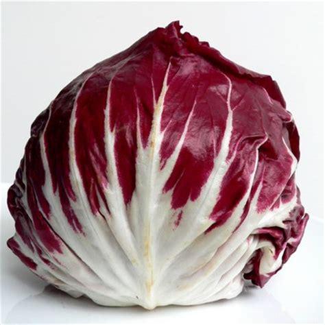 come cucinare il radicchio trevisano radicchio rosso gustosa verdura invernale