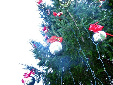natick holds annual tree lighting on the common patch