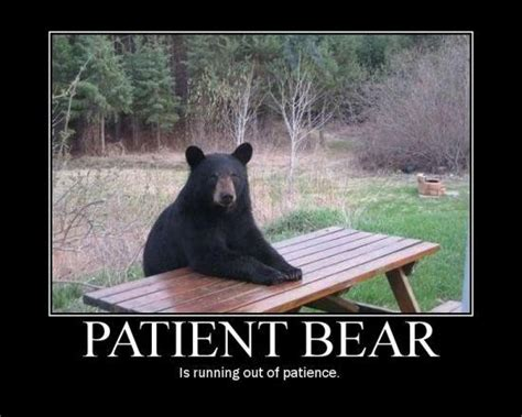 Bear At Picnic Table Meme - patient bear bear sitting at table know your meme