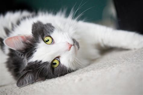 cat resistant wallpaper how cats could help to treat hiv