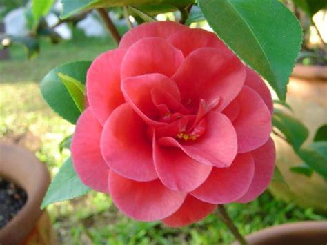 imagenes rosas mas bellas mundo las maravillosas flores hermosas del mundo para todos