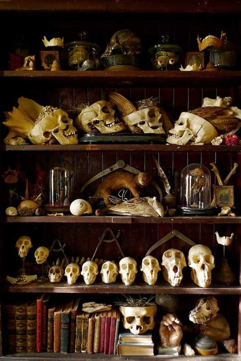 Cabinet Of Curiosities by Cabinets Of Curiosities 37 Images Church Of