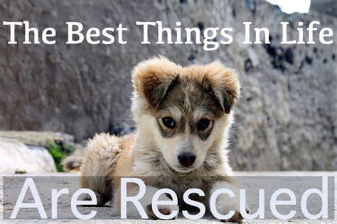 puppy pet rescue rescue quotes quotesgram