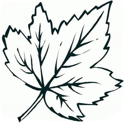 Coloring Page Leaf by Leaves Coloring Pages Coloringsuite