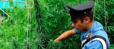 coltivare marijuana in casa senza lade coltivare marijuana in casa non sar 224 reato 200 una bufala