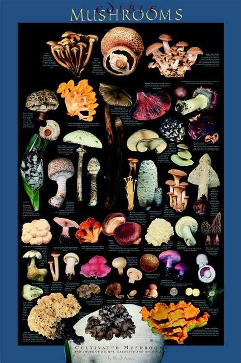 edible backyard mushrooms 29 best images about art mushrooms on pinterest