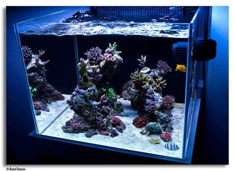 live rock aquascaping ideas minimalist aquascaping page 68 reef central online