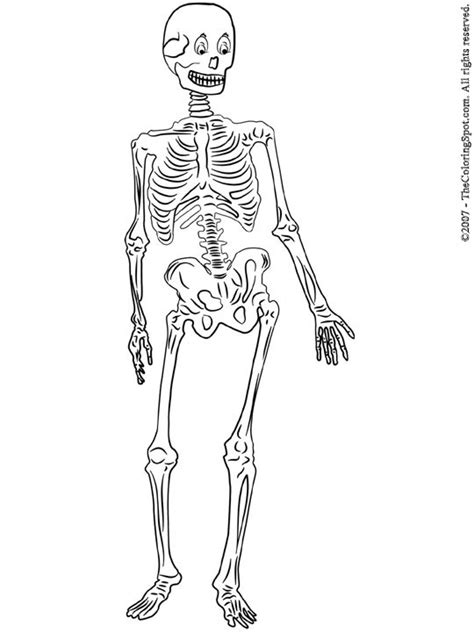 anatomy coloring pages skeleton skeleton coloring pages skeleton printable coloring pages