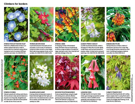 30 of the best climbing plants gardens illustrated - Name Of Climbing Plants