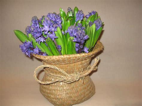 significato dei fiori giacinto il giacinto 232 un fiore di co dizionario fiori a