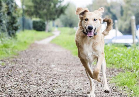 why do dogs run away dogs that run away best 2017