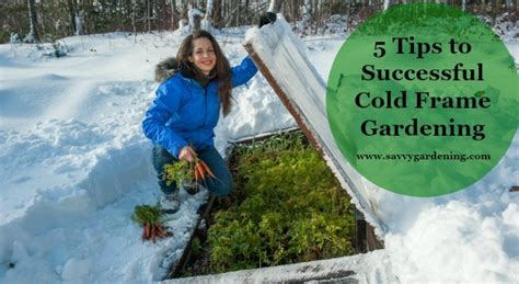 tips  successful cold frame gardening