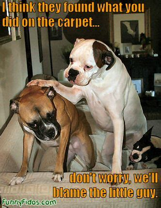 Funny Boxer Dog Memes - funny image collection funny quotes happy lucky dog