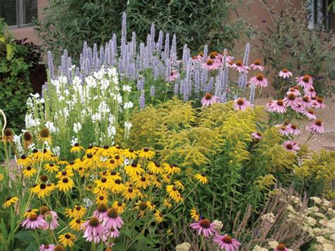 Summer Garden Plants by Discover Cottage Gardens Serenity Secret Garden