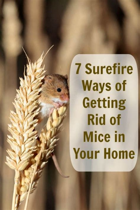 get rid of those bothersome mice without paying a