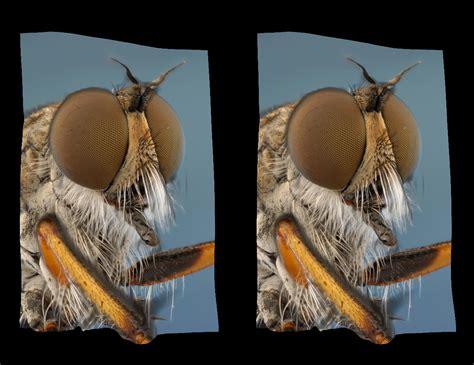 Imagenes 3d Ojos Cruzados | imagenes en 3d ojos cruzados mosca imagenes para facebook