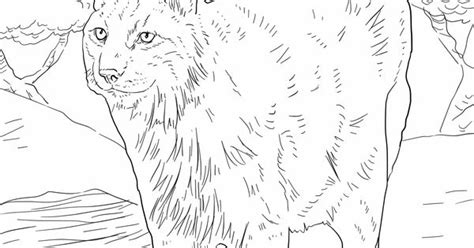 eurasia coloring page bobcat coloring pages lynx coloring pages eurasian lynx