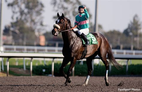 related keywords suggestions for 2013 racehorse zenyatta