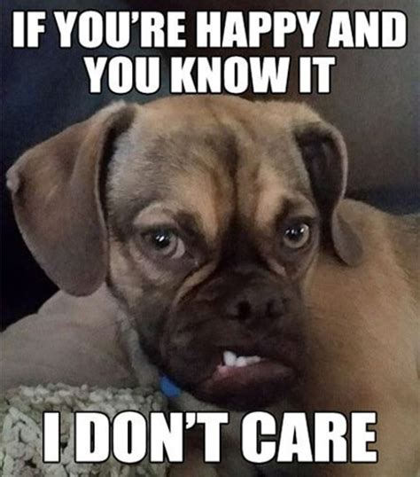 Grumpy Dog Meme - grumpy earl the puggle gives grumpy cat a run for her