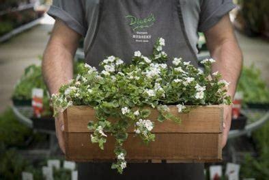 top  plants  plant  season diacos garden nursery