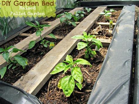 pedane chep raised pallet garden bed pallets designs