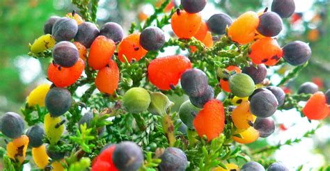 5 fruit tree this amazing fairytale tree can grow 40 different kinds of