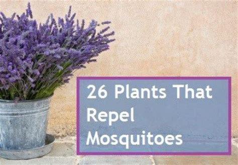 56 best gardening images on pinterest gardening gardening vegetables and garden shade