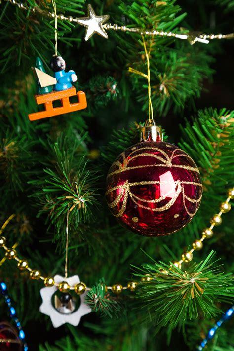 images evening evergreen holiday fir decor