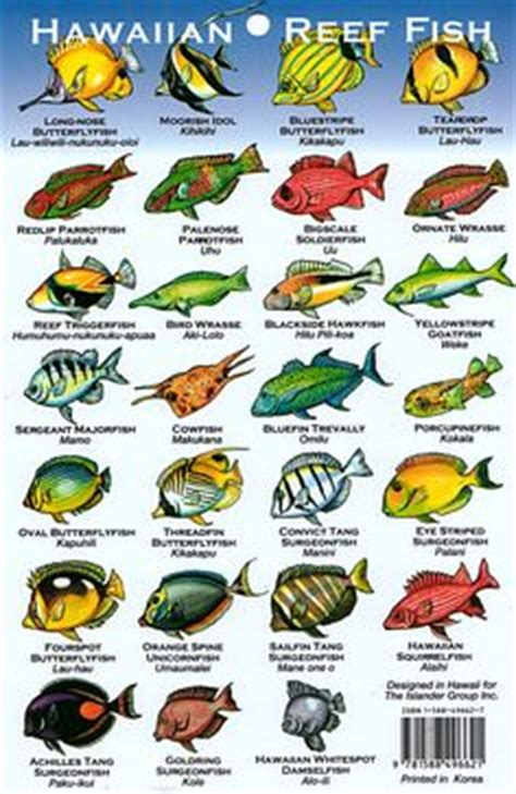 the ultimate guide to hawaiian reef fishes sea turtles hawaii reef fish guide with hawaiian names 2 aloha joe