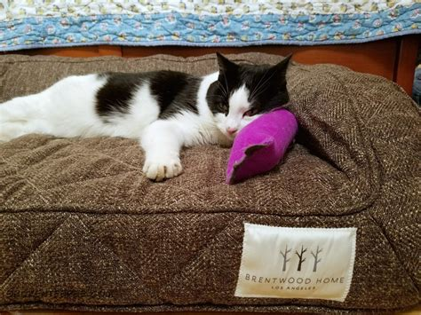 comfortable pet pet beds comfortable pet beds for cats and dogs from brentwood home