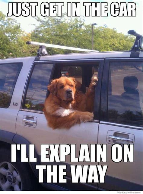Dog In Car Meme - car memes page 21