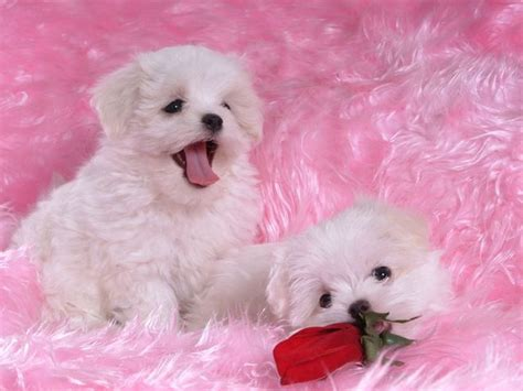 puppy screensavers idg downloads puppies free screensaver