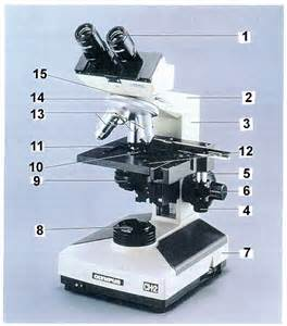 microscope use