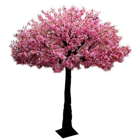 cherry blossom tree cherry blossom tree hire