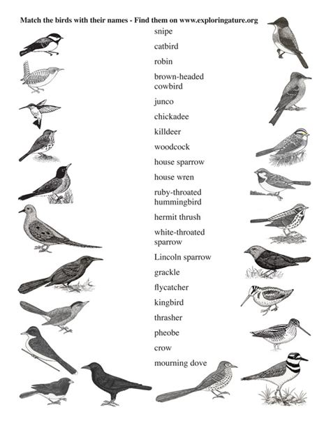 image gallery names of small birds