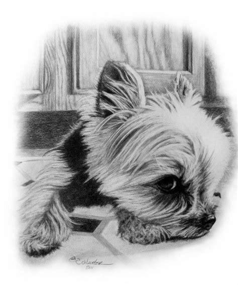 yorkie sketch the yorkie sketch http www gensart net small breed i ve sketched
